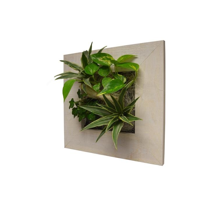 Cadre végétal S vieux bois blanchi 31x31 cm avec 4 plantes