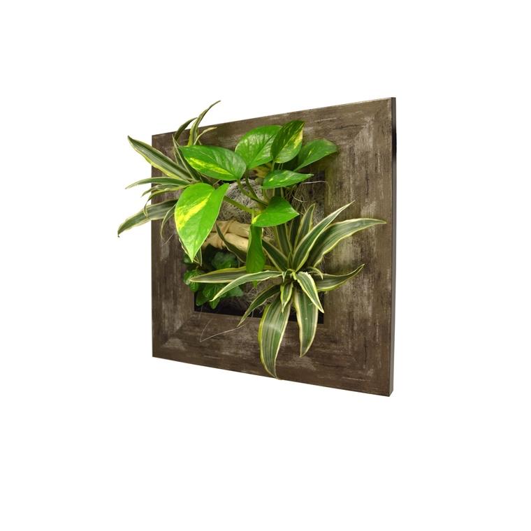 Cadre végétal S métal vieilli 31x31 cm avec 4 plantes
