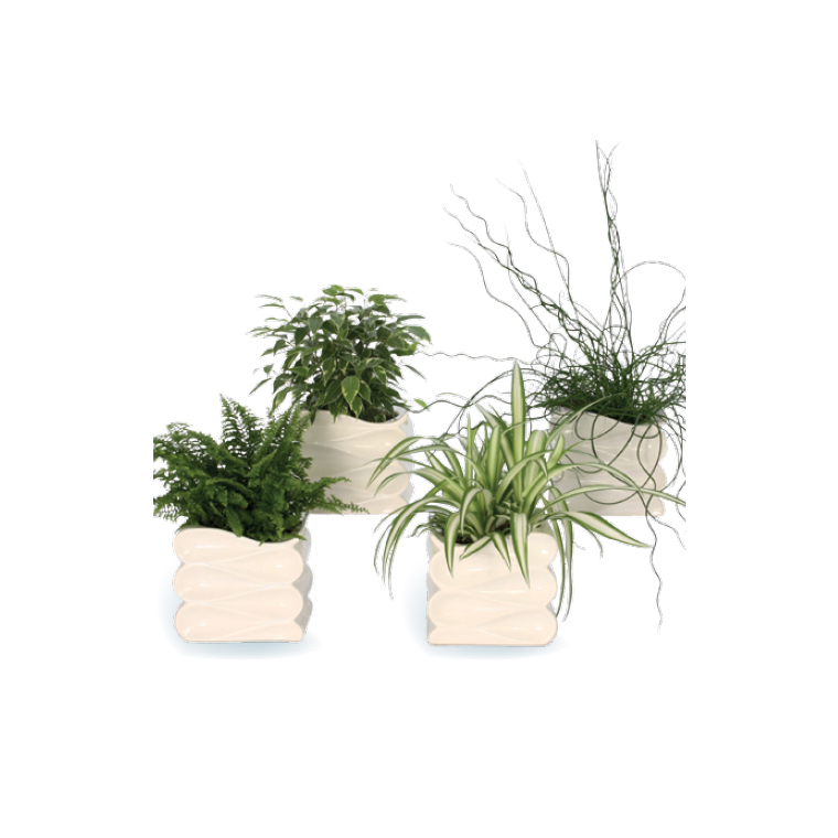 Plante verte avec Cache-Pot