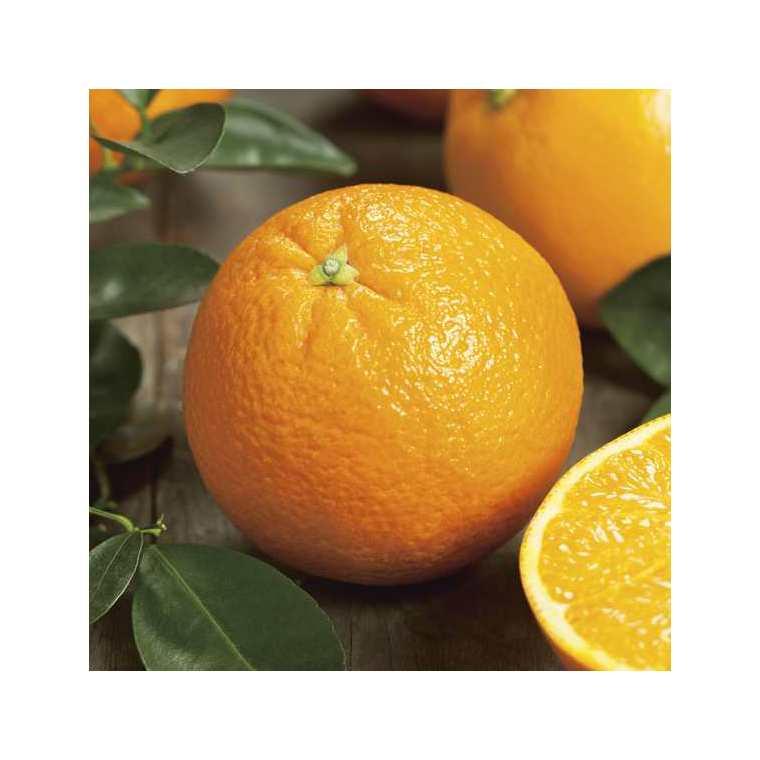 Orange Naveline - Prix au kg 242569