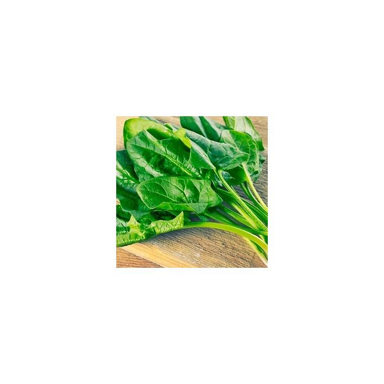 Poirée Verte À Tondre. Le pot de 10,5 cm 253837