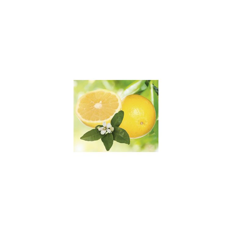 Pomelo Jaune en pot de 3 L Bio 255489