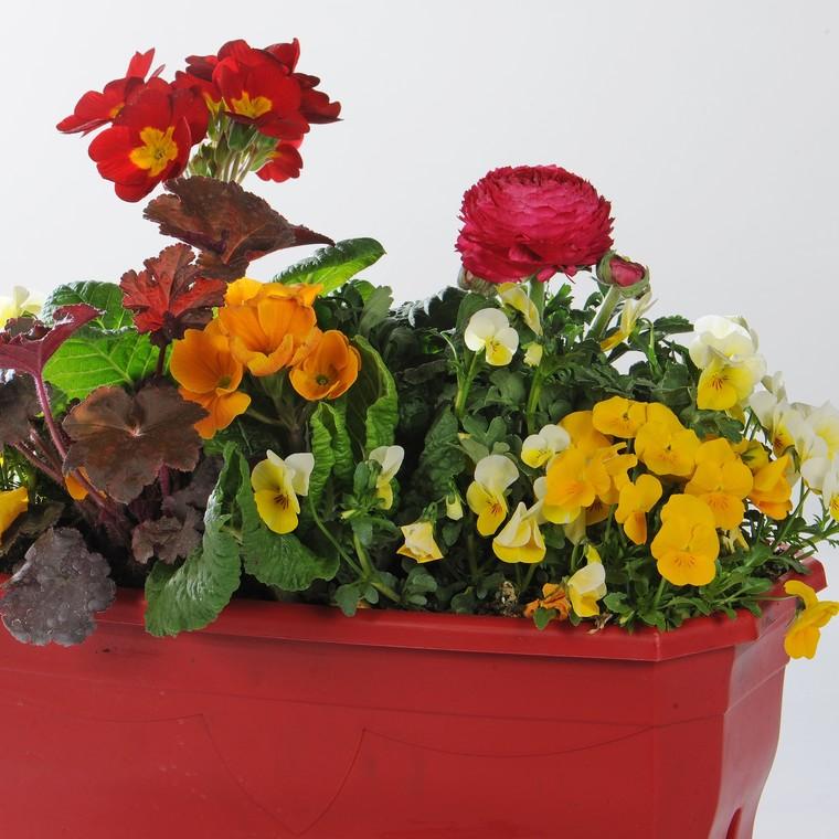 Jardinière variée. La jardinette de 25 cm 256028