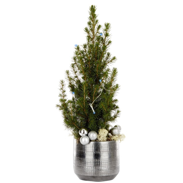 Picea Conica pot gris + guirlande LED. Le pot 256041