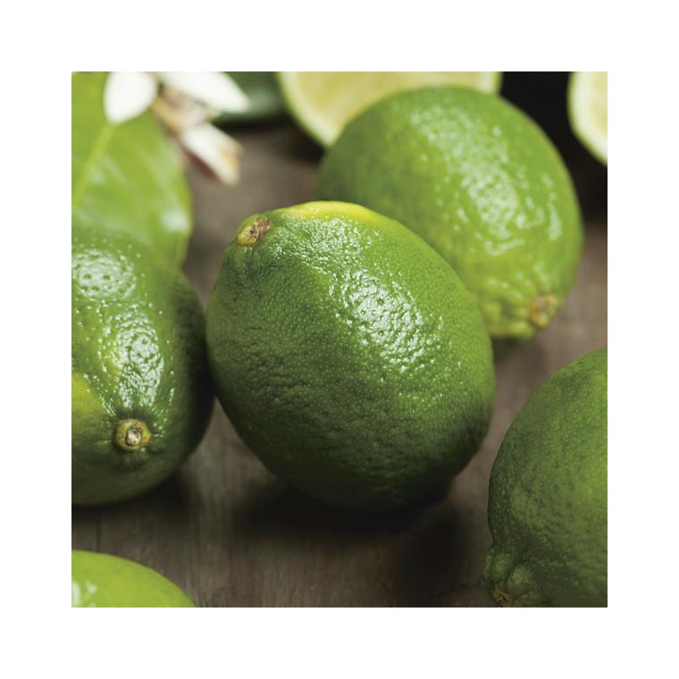Citronnier Lime de Tahiti bio Le pot de 3 litres 257704