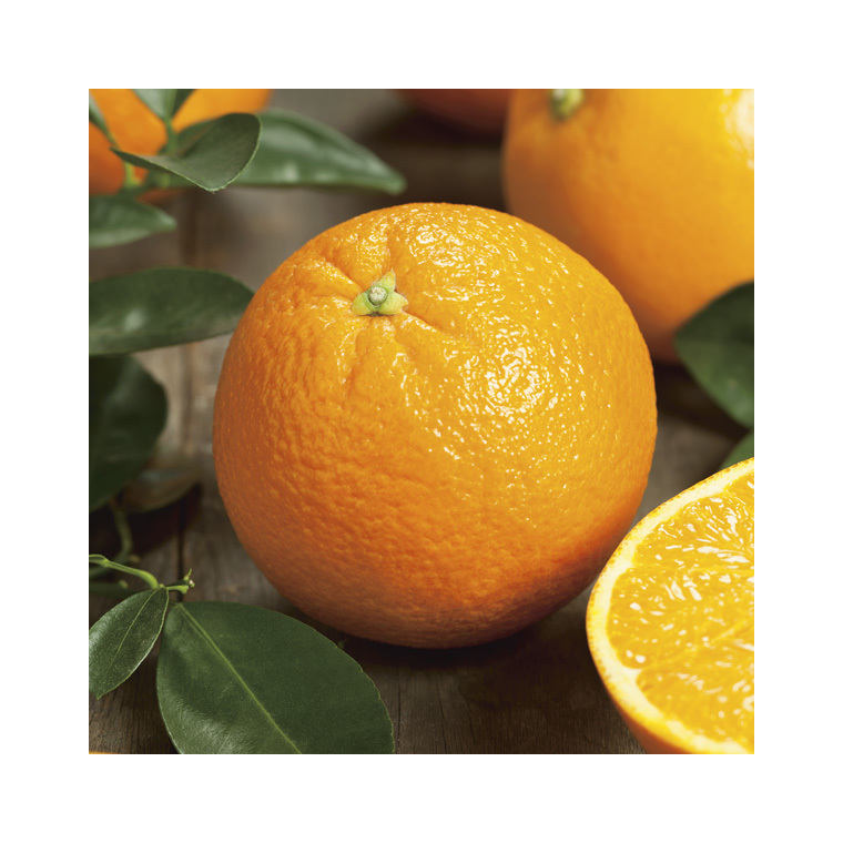 Oranger Navel bio. Le pot de 3 litres 257706