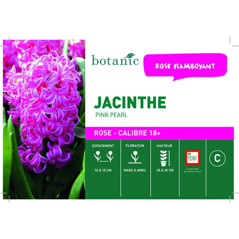 Bulbe jacinthe pink pearl rose en vrac botanic® x 1 258074