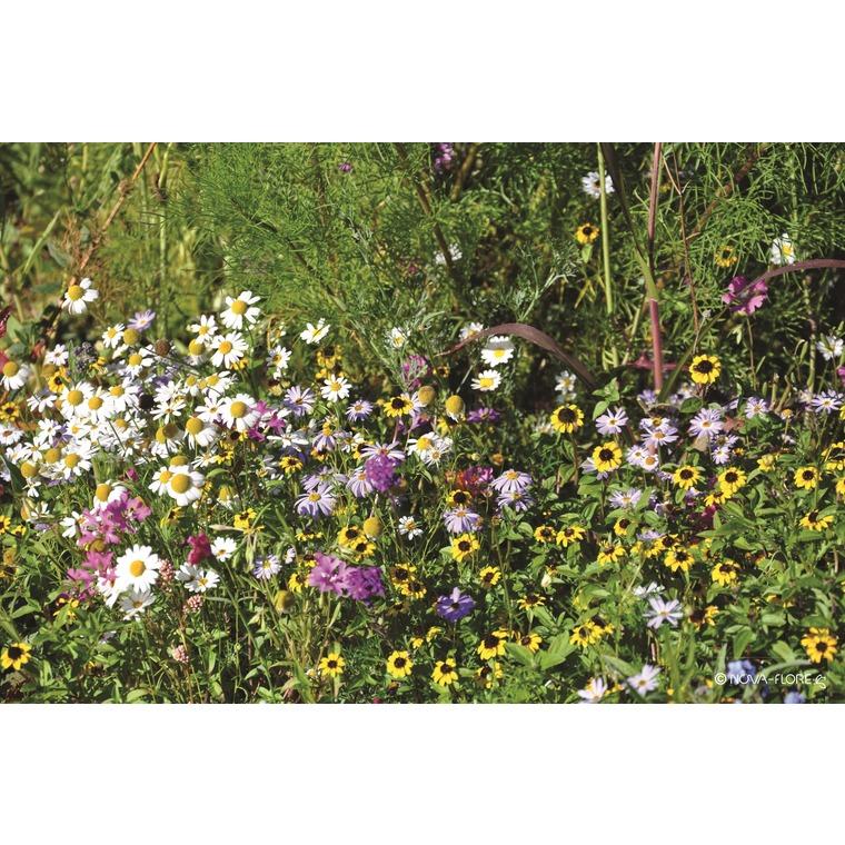Fleurs mellifères pied d'arbre 260135