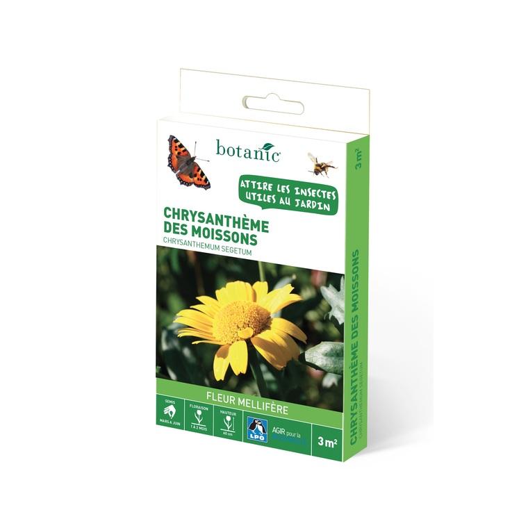 Chrysantheme des moissons 260165