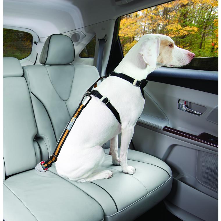 Laisse pour chien direct to seatbelt