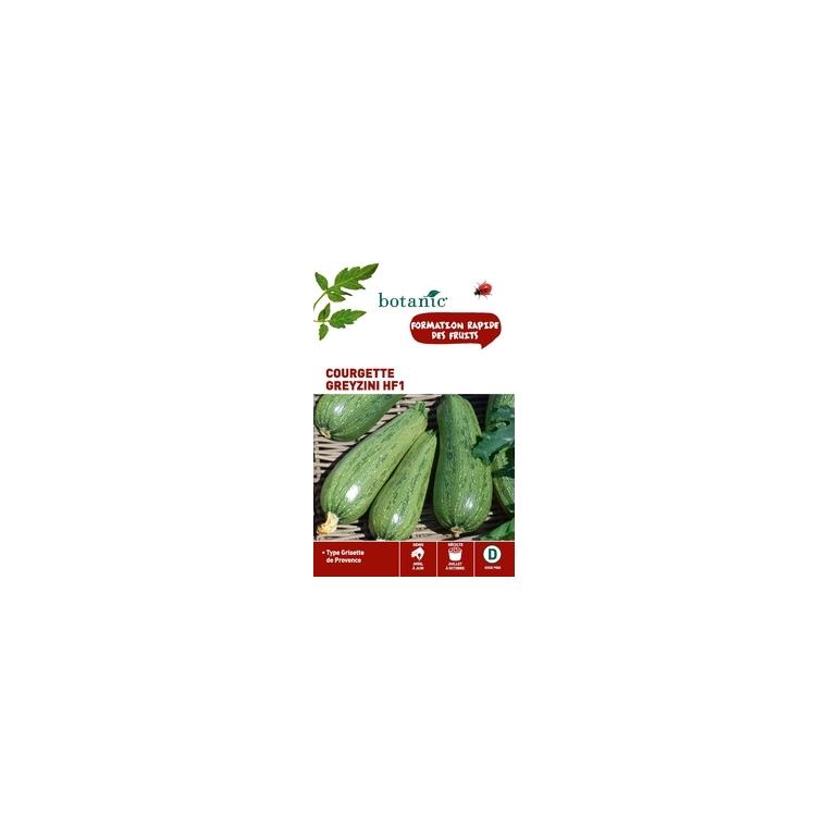 Courgette greyzini hybride hf1