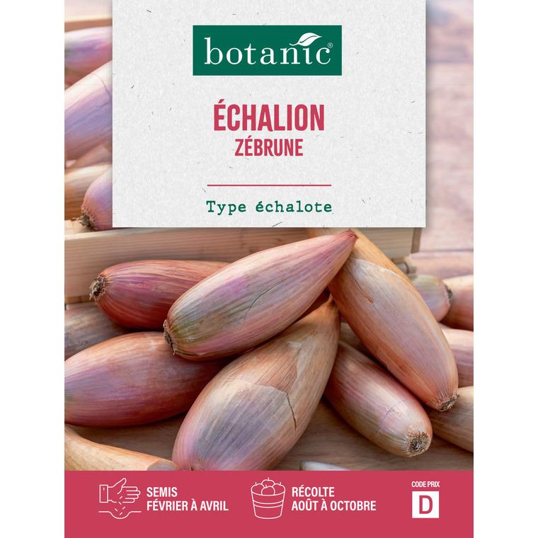 Echalion zebrune Caillard 261172