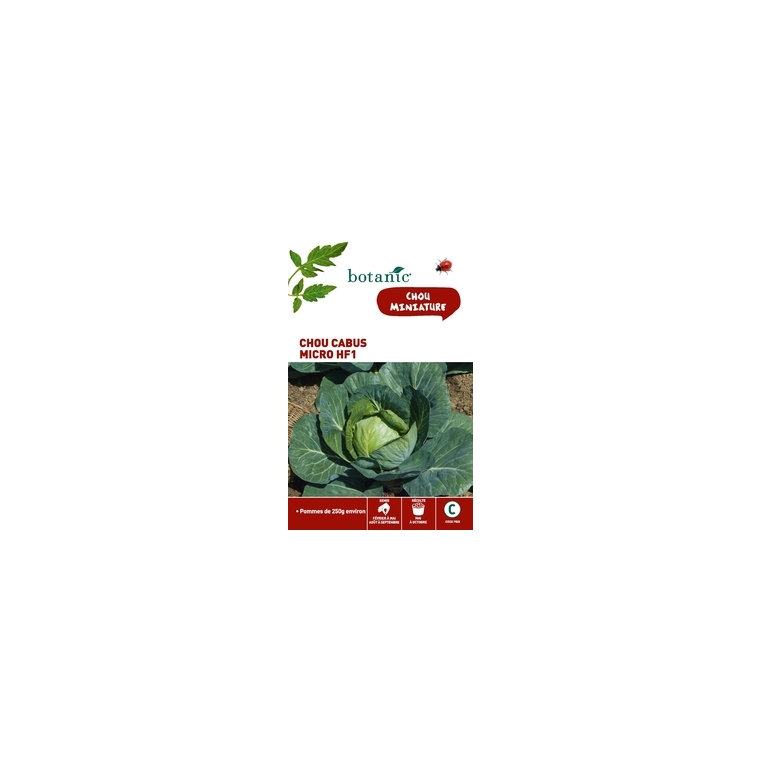 Semences potagères pour chou cabus micro hybride f1 261275