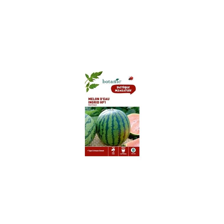 Melon d'eau (pasteque) ingrid hybride f1 Insolite x2 sachets