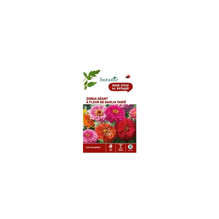 Zinnia géant à fleur de dahlia varié en sachet 261340