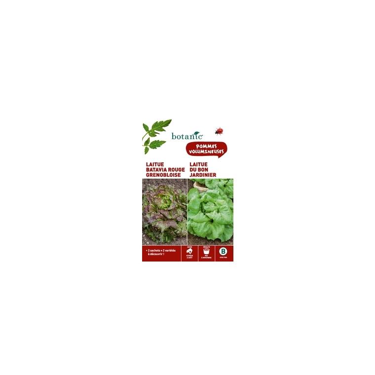 Laitue batavia rouge  grenobloise  +  laitue du bon jardinie Duo potagere 261356
