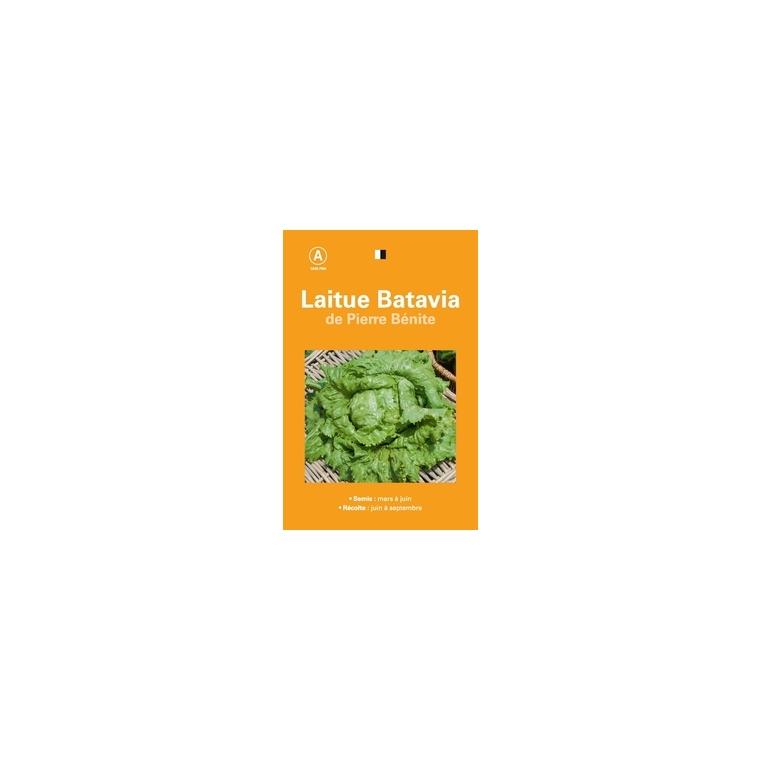 Laitue batavia pierre benite 261525