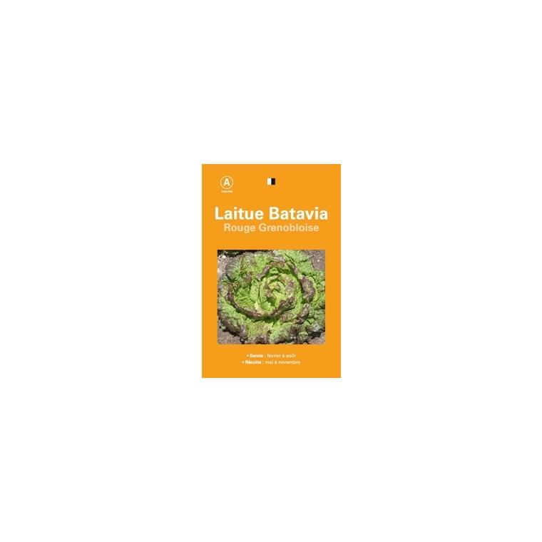 Laitue batavia rouge grenobloise 261526