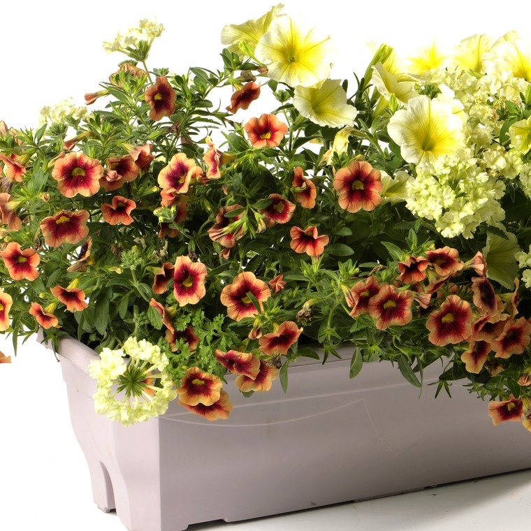 Jardinière inspiration. La jardinière de 40 cm 262103