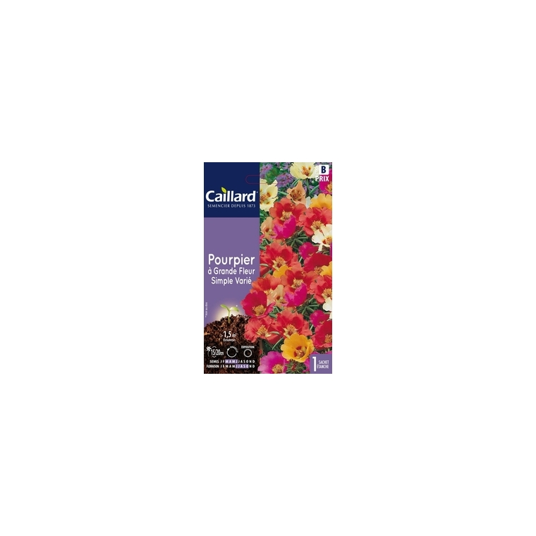 Pourpier à grande fleur simple varié en sachet 263170