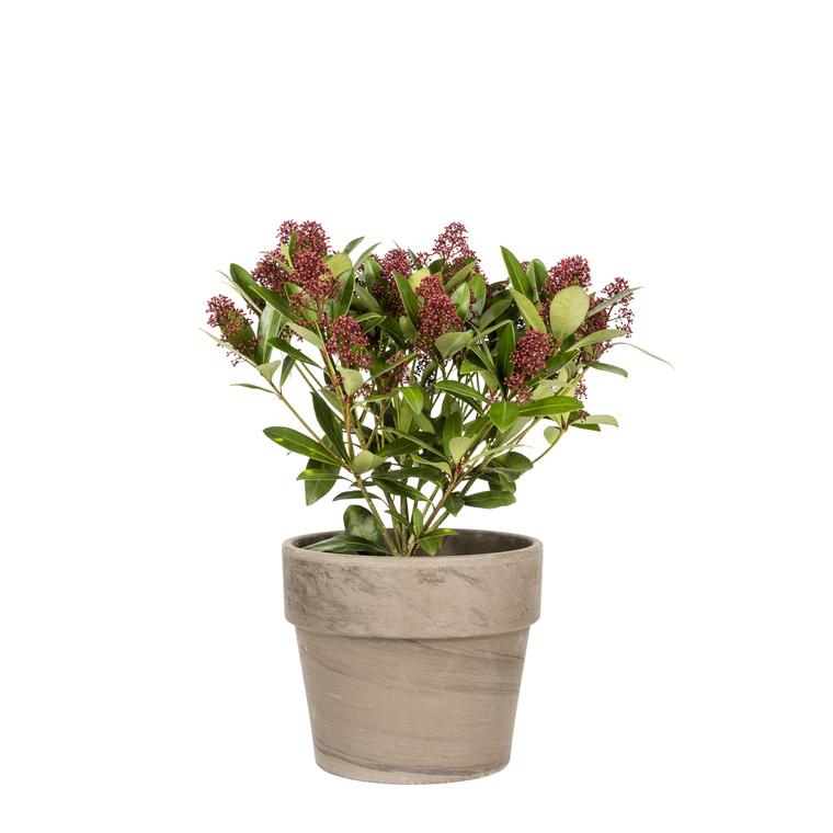 Pot Calima D38x H33,4 Basalt 263524