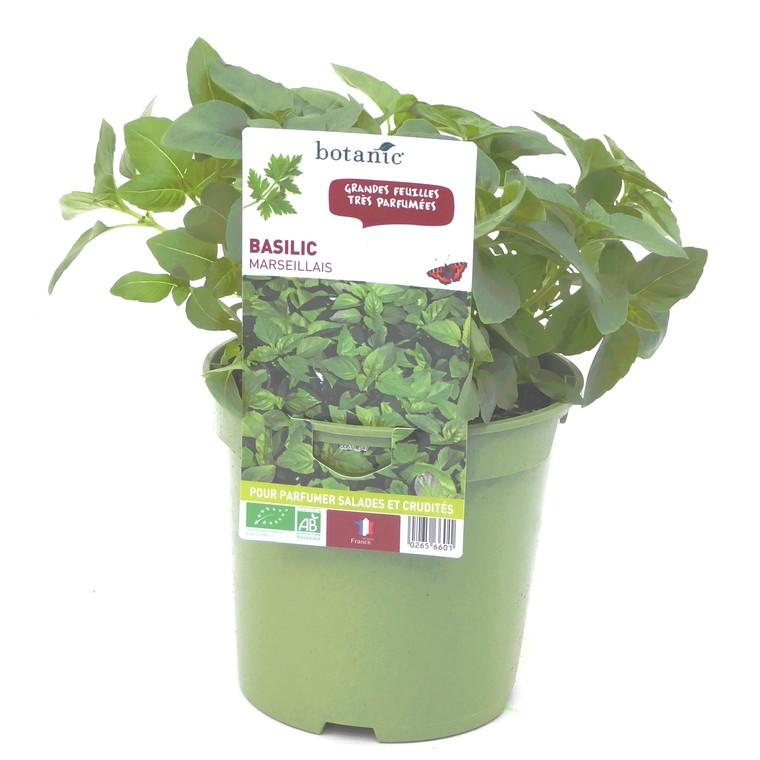 Basilic Marseillais bio. Le pot de 1 litre recyclé 265660