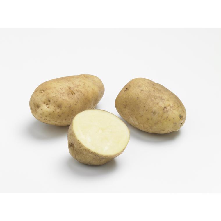 10 plants de pommes de terre bintje calibre 28 à 35 276901
