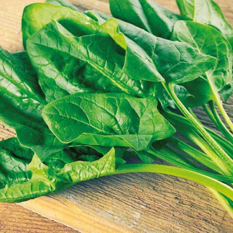 Poirée Verte À Tondre Grüner. Le pot compostable de 10,5 cm 278599