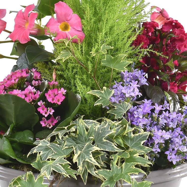 Composition fleurie pour extérieur. La coupe de 27 cm 279079