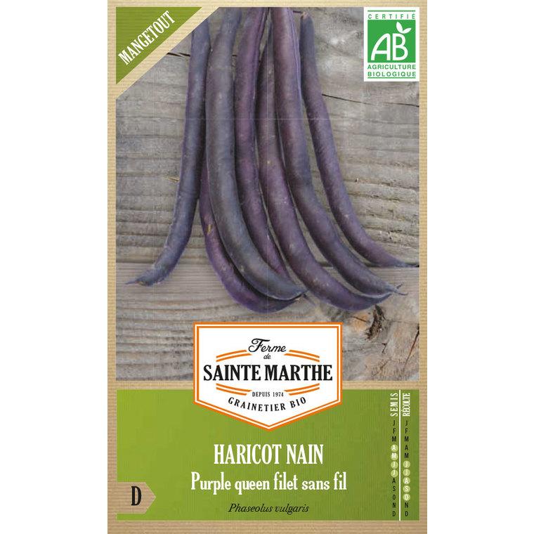 Haricot Nain Purple Queen Bio 282761