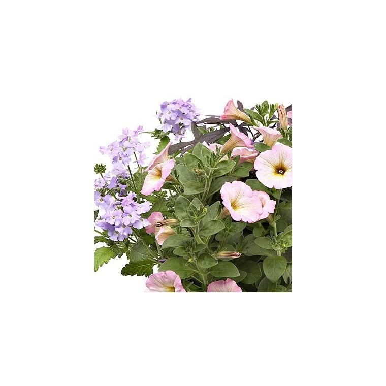 Melange Confetti Romantique. La jardinière de 50 cm