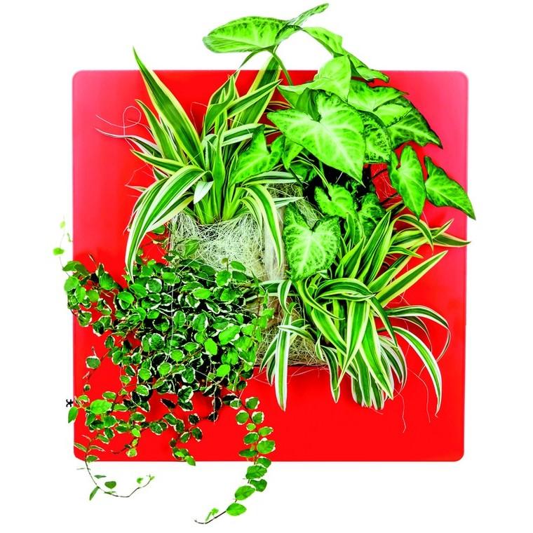 cadre v g tal s basic rouge 31x31 cm plantes et fleurs d 39 int rieur nos produits botanic. Black Bedroom Furniture Sets. Home Design Ideas