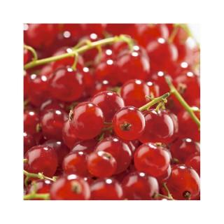 Groseillier Agate Rouge en conteneur de 2 L 310089