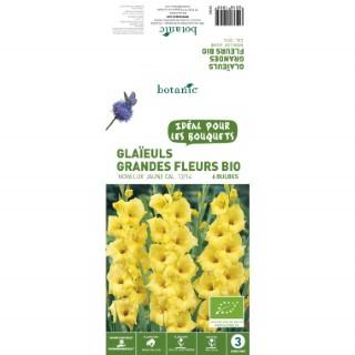 6 bulbes de Glaïeul Grande Fleur Hybride Novalux BIO - Jaune 310199