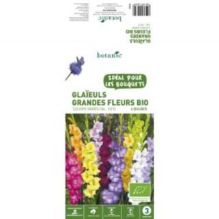 6 bulbes de Glaïeul Grande Fleur Hybride Mélange BIO - Multicolore 310203