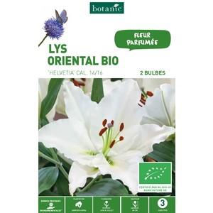2 bulbes de Lys Oriental Helvetia BIO - Blanc 310219