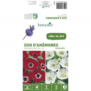20 Bulbes d'Anémone Mélange – Rouge/Blanc 310254