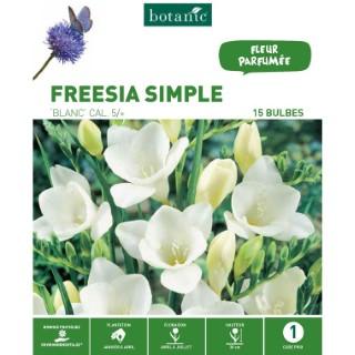 20 bulbes de Freesia Simple - Blanc 310257