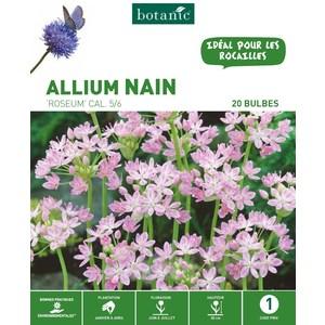 20 bulbes d'Allium Roseum - Rose 310276