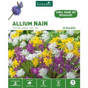 20 bulbes d'Allium Mélange – Couleurs variées 310277