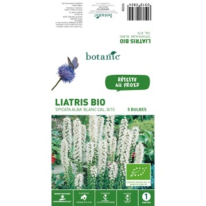 5 bulbes de Liatris Spicata Alba BIO - Blanc 310282