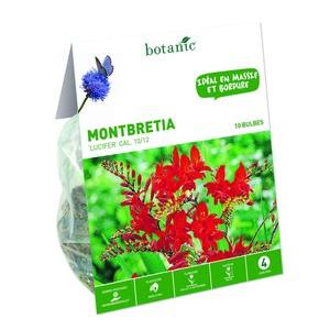10 Bulbes de Montbretia Lucifer – Rouge 310284