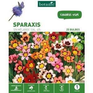 Sparaxis en mélange - Variés - 25 bulbes 310287