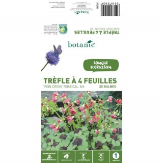 Oxalis Deppei Iron Cross - Rose - 25 bulbes 310290