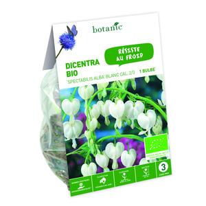 Bulbe de Dicentra Spectabilis Alba BIO - Blanc 310305