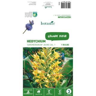 Bulbe de Hedychium Gardenarium - Jaune 310324