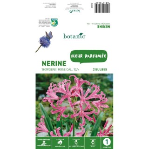 2 bulbes de Nerine Bowdenii – Rose 310328