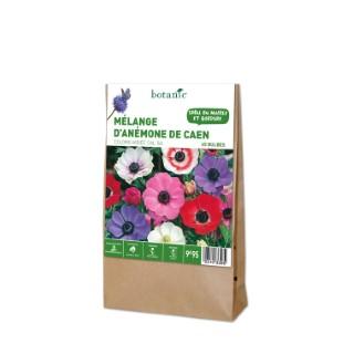 45 bulbes de Mélange d'Anémones de Caen en panier – Couleurs Variées 310339