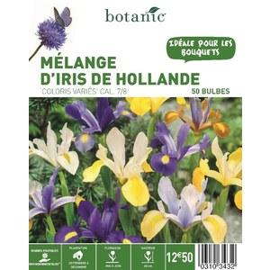 60 bulbes de Mélange d'Iris Hollandica en panier – Couleurs Variées 310343