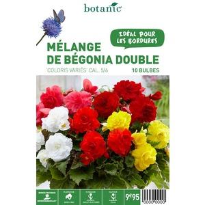 12 bulbes de Mélange de Bégonia double en panier – Couleurs variées 310344